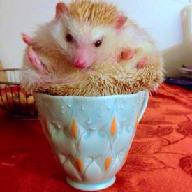 Kristen Kieffer stamped mug with hedgehog